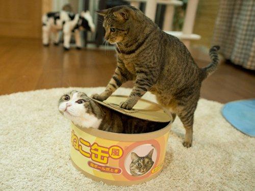 cat-pictures-box