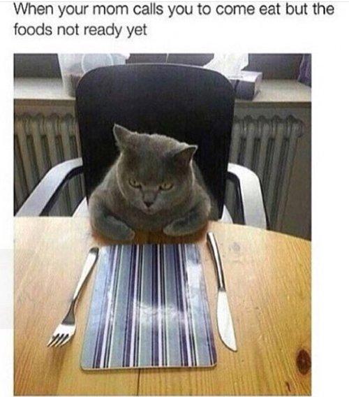 cat-pictures-dinner