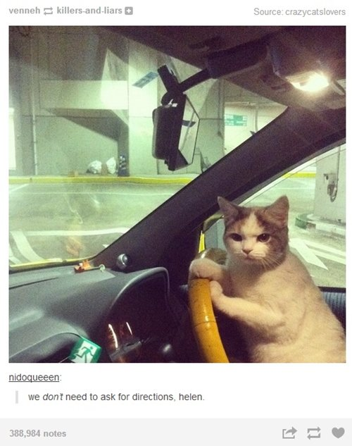 cat-pictures-directions