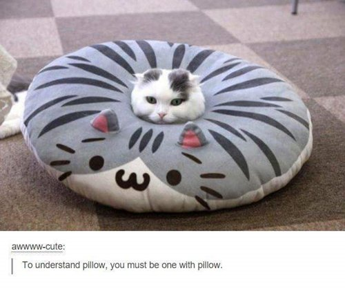http://www.awesomeinventions.com/wp-content/uploads/2016/04/cat-pictures-pillow.jpg