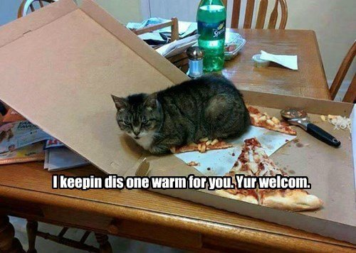 cat-pictures-pizza