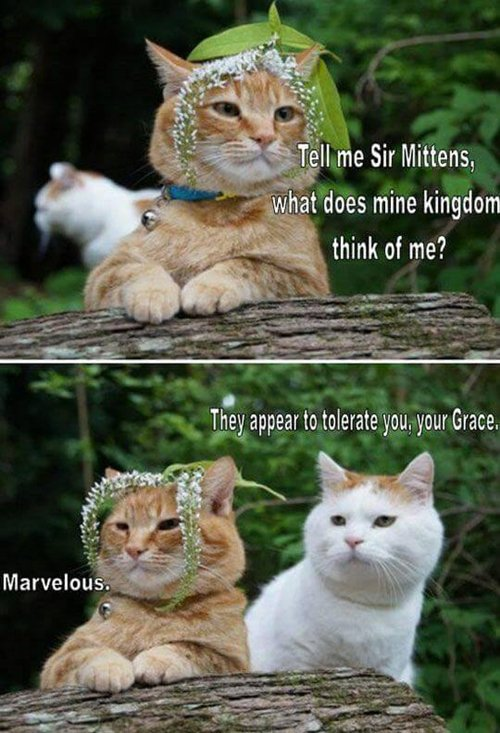 http://www.awesomeinventions.com/wp-content/uploads/2016/04/cat-pictures-sir.jpg