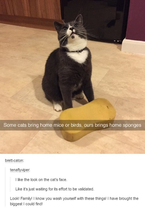 15 Funny Pictures Of Cats To Make Your Day Better