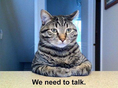 cat-pictures-talk