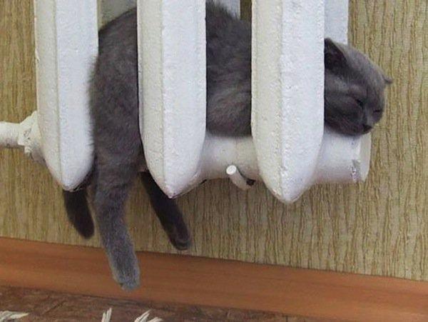 cats-heat