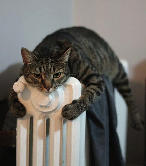cats-heater