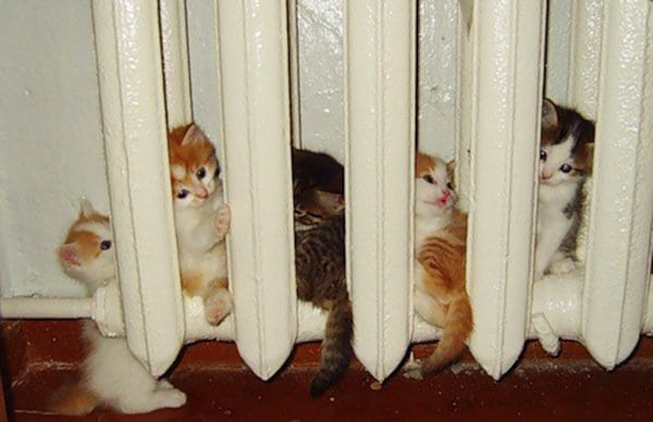 cats-kittens-warm