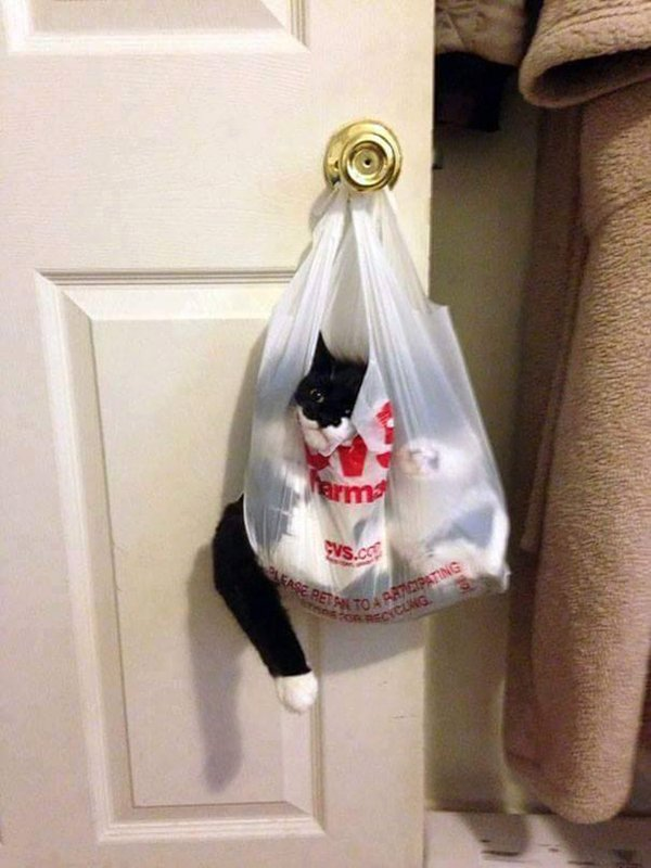 cats-regretting-choices-bag