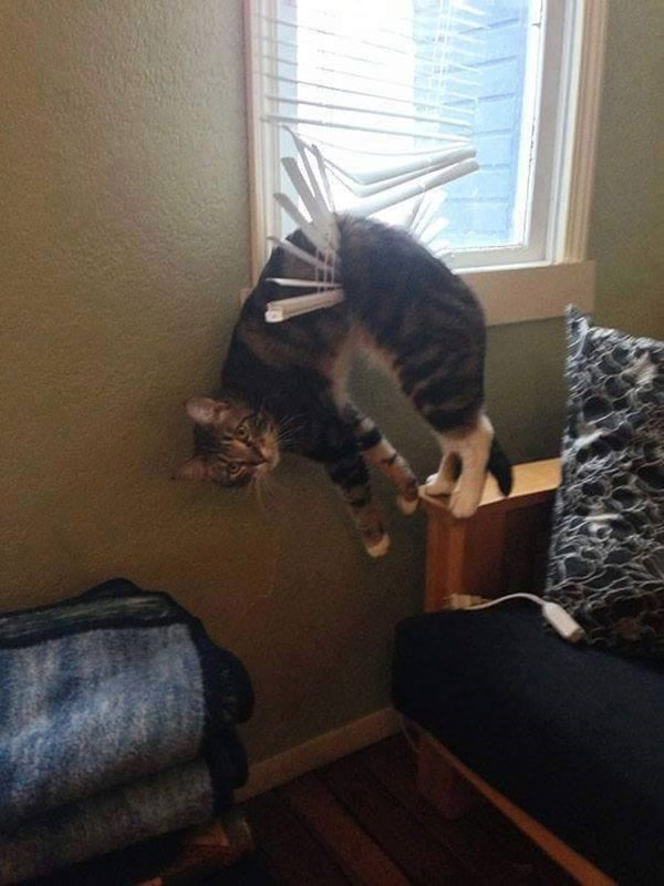 cats-regretting-choices-blind
