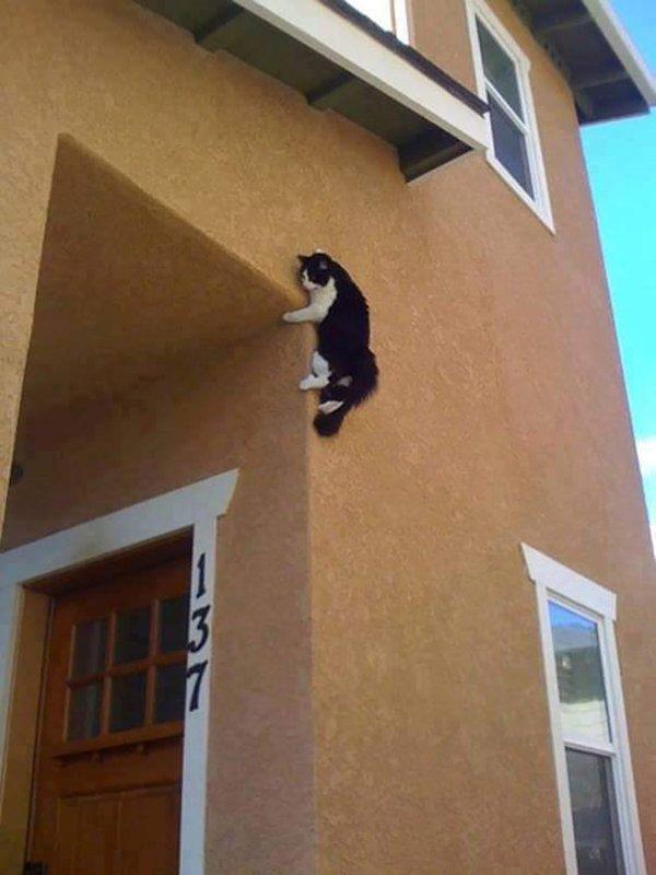 cats-regretting-choices-climb