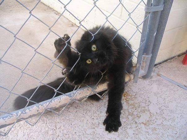 cats-regretting-choices-fence