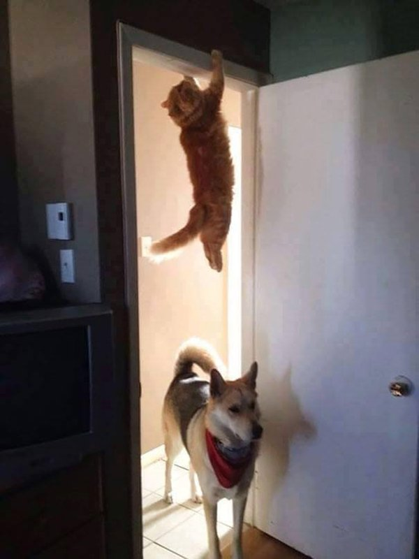 cats-regretting-choices-hang