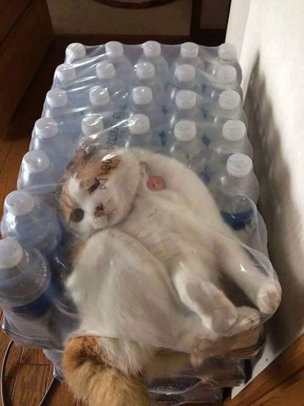 cats-regretting-choices-plastic