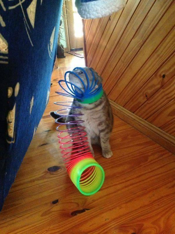 cats-regretting-choices-slinky
