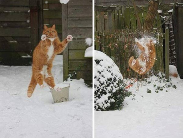 cats-regretting-choices-snow