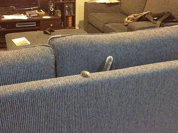 cats-regretting-choices-sofa
