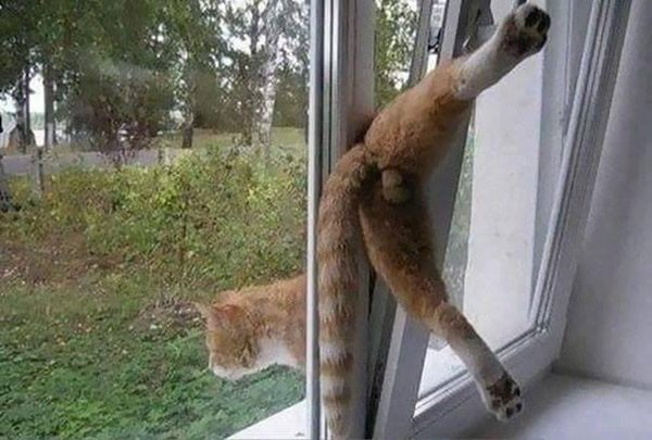 cats-regretting-choices-stuck