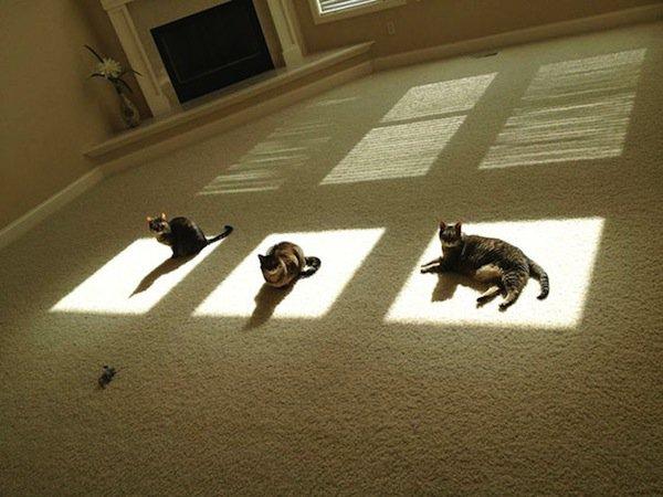 cats-spots