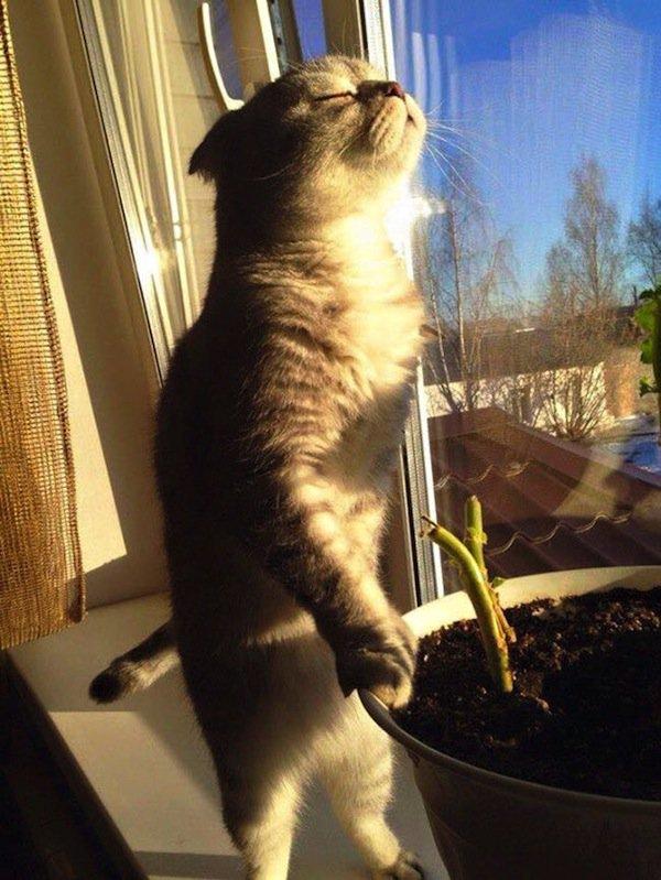 cats-sun