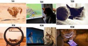 cats technology