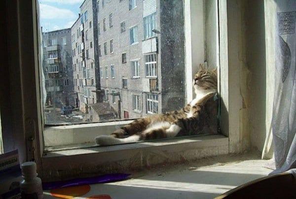 cats-window