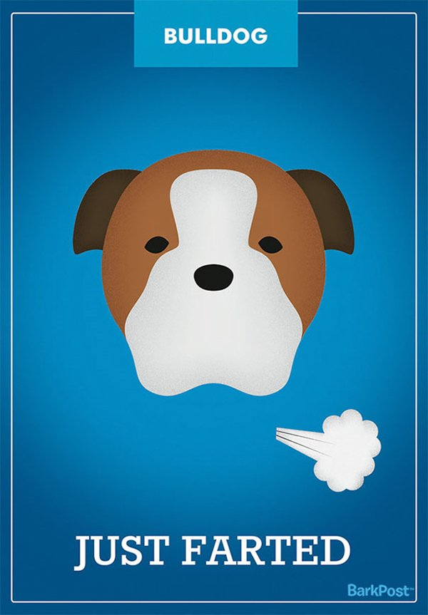 dog-breed-illustrations-laura-palumbo-farts-bulldog