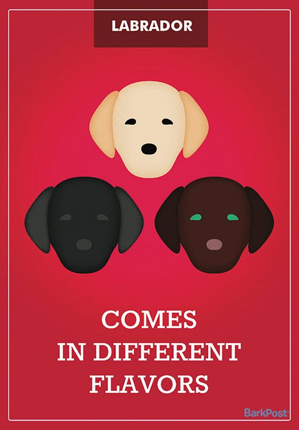 dog-breed-illustrations-laura-palumbo-flavor-labradors