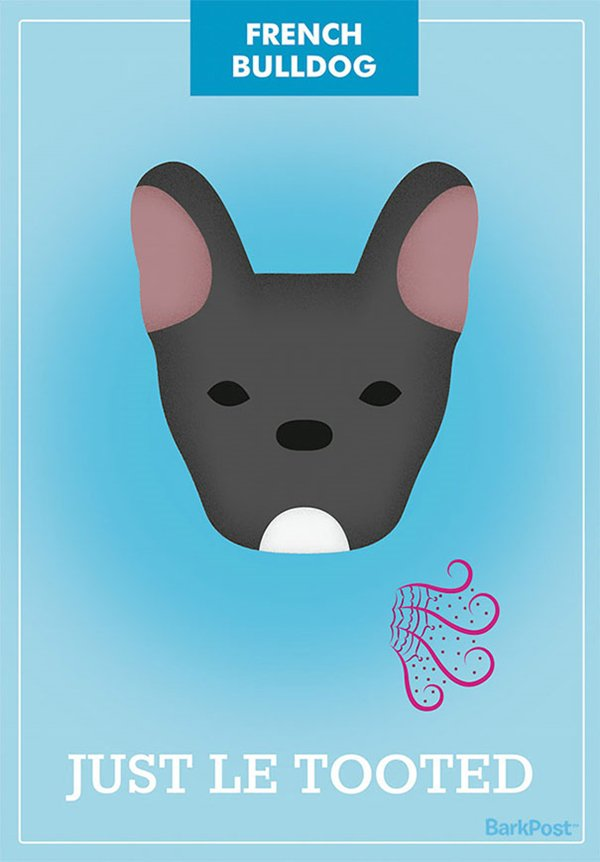 dog-breed-illustrations-laura-palumbo-french-bulldog