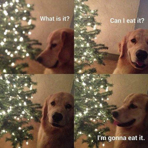dog-eat