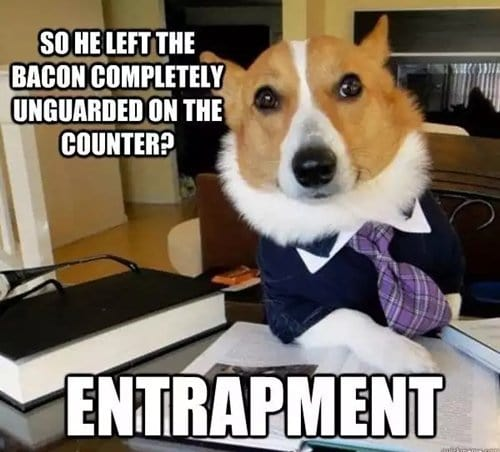 dog-entrapment