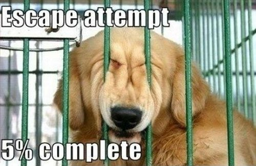 dog-escape