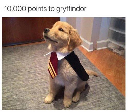 dog-gryffindor