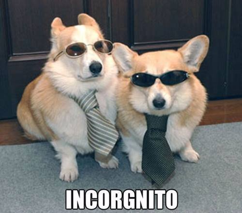 dog-incorgnito