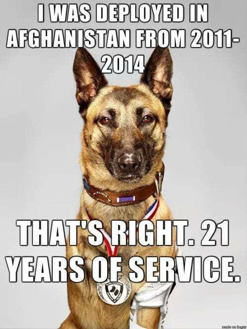 dog-service