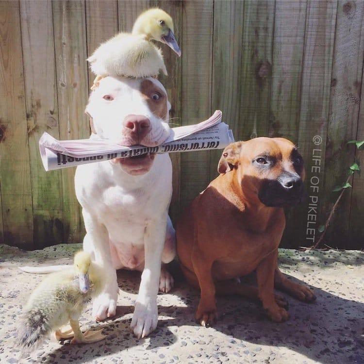 duck-dog-duck