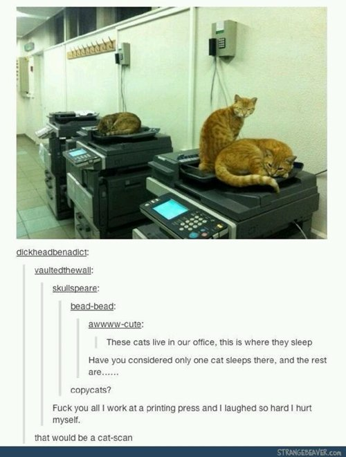 funny-animals-copy
