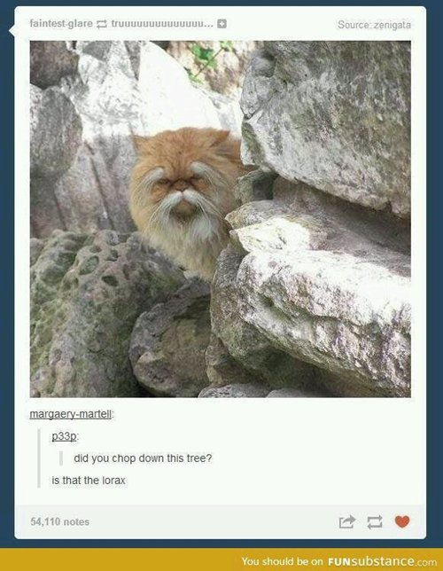 funny-animals-lorax