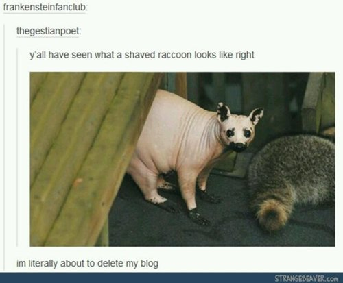 funny-animals-shaved