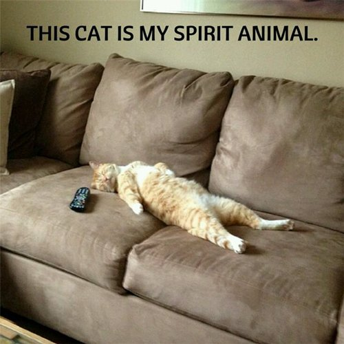 funny-animals-spirit