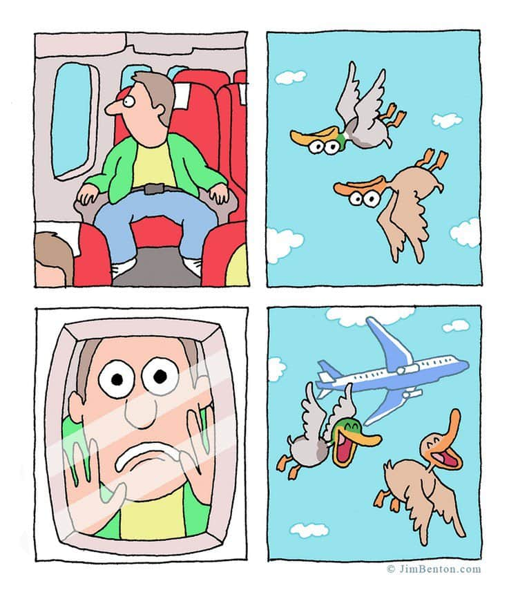 funny ducks plane