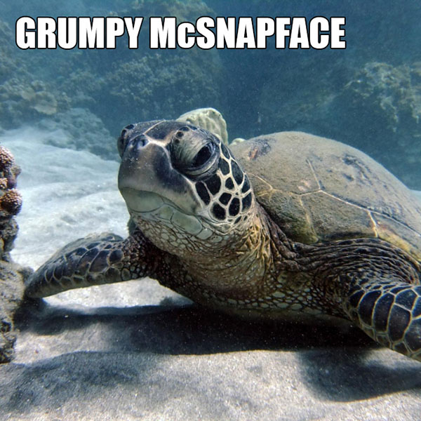 40 Funny Animal Names That Sound So Much Better