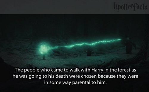 harry-potter-facts-forest