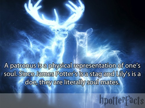 harry-potter-facts-soulmates
