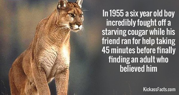historic-badasses-cougar