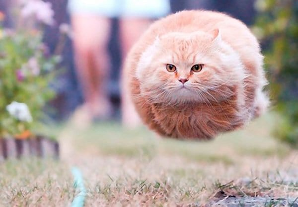 perfectly-timed-cat-ball