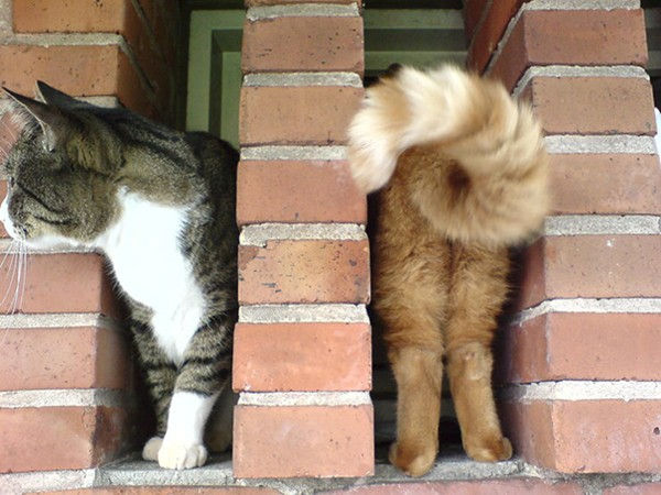 perfectly-timed-cat-bricks