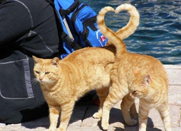 perfectly-timed-cat-heart