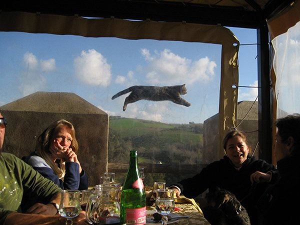 perfectly-timed-cat-jump