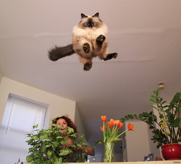 perfectly-timed-cat-leap