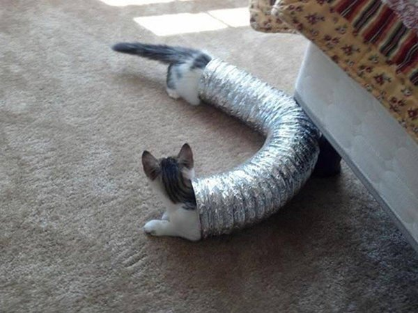 perfectly-timed-cat-long